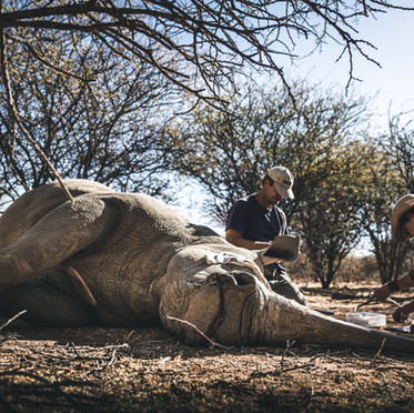 #119 Alex Oelofse, Game Capture, Conservation, Photographic Tourism, Namibia