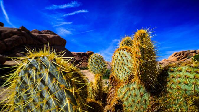 saturated Cactus