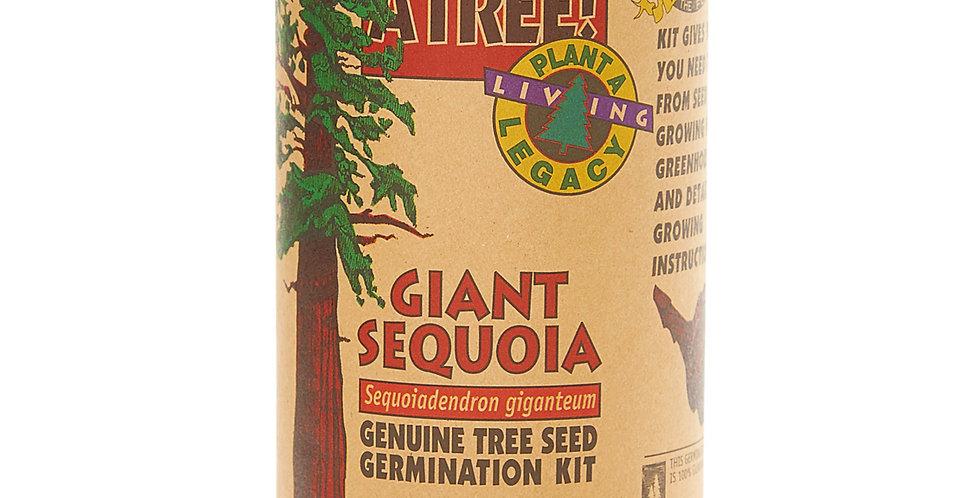 Grow Your Own Giant Sequoia Tree Kit