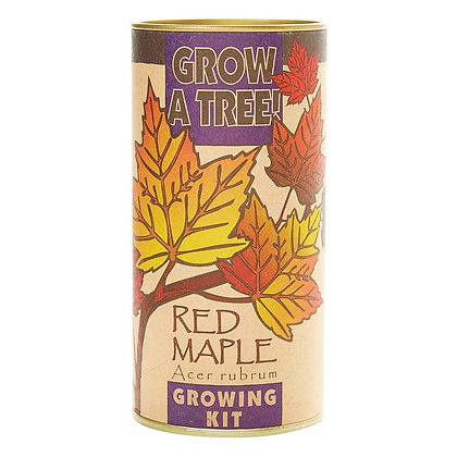 Grow Your Own Red Maple Kit