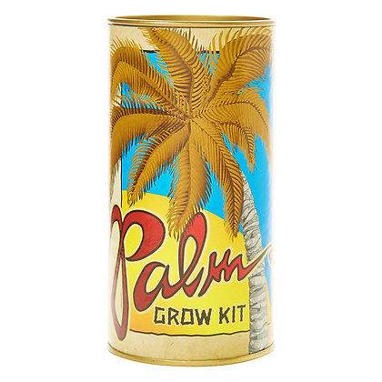 Grow Your Own California Fan Palm Tree Kit