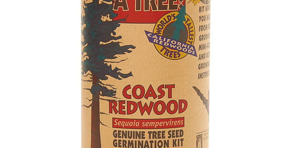 Coast Redwood Tree Grow Kit