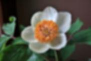 Turkish Flora, Flora Of Turkey, Alper Ertubey, Hike'n Sail Turkey