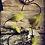 Thumbnail: Green Fairy Headband