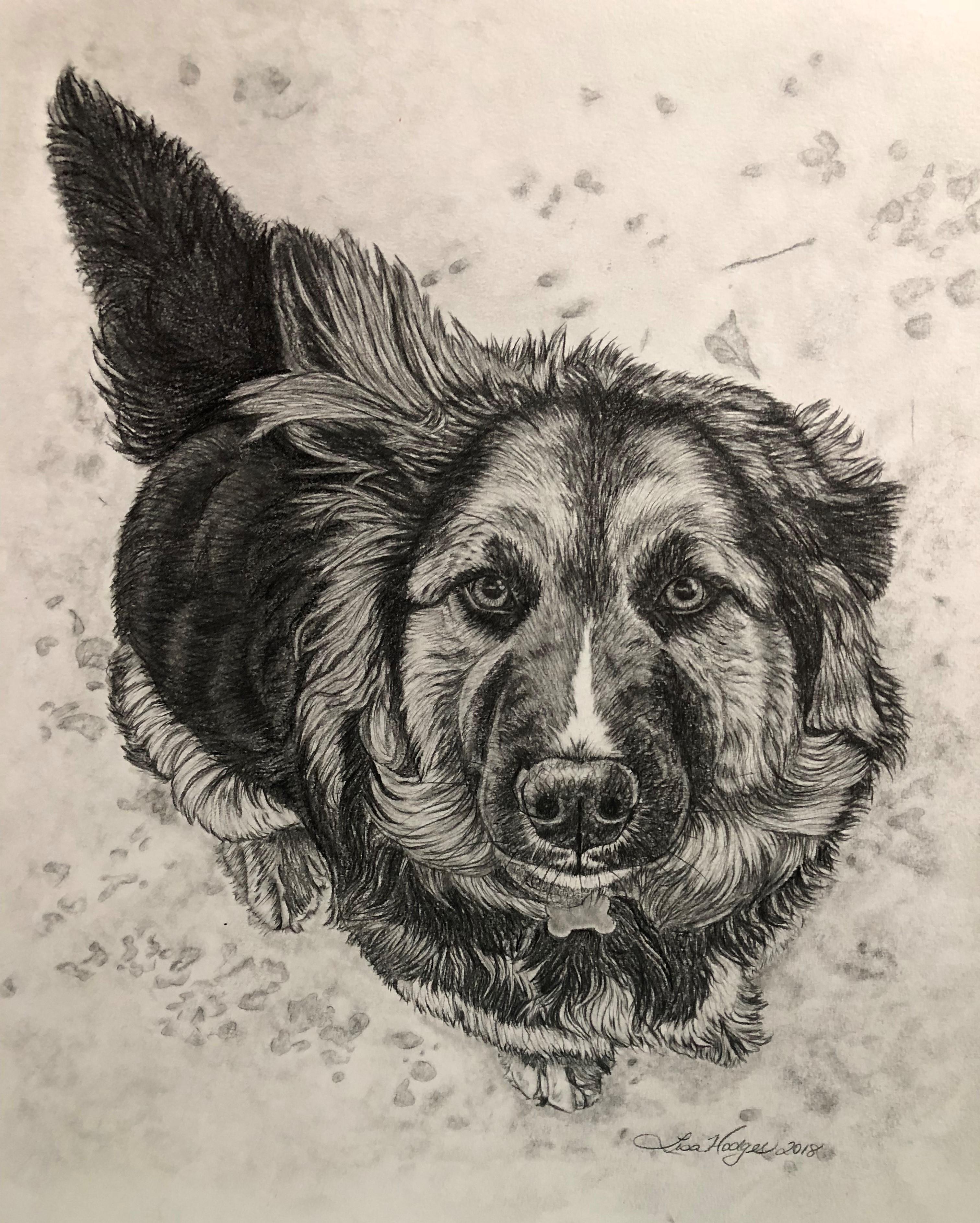 Pet Portraits and Artwork
