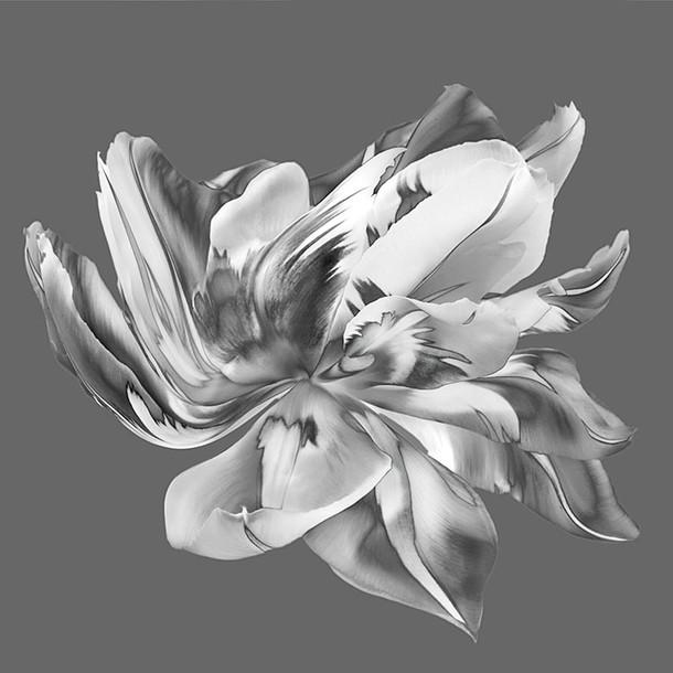 B&W Tulip 02