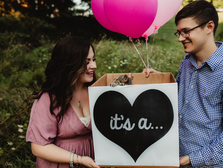 Pet Gender Reveal | St. Joseph, Missouri