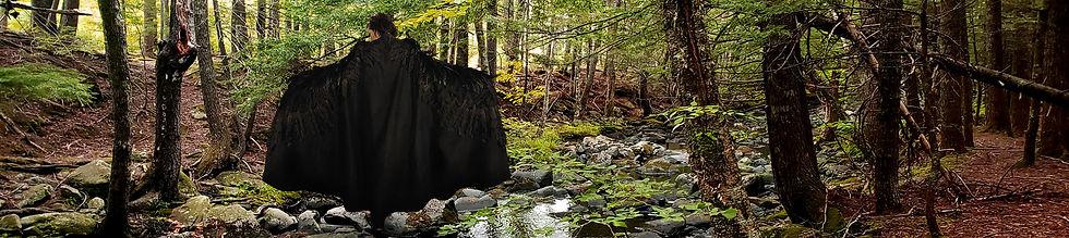 forest_web2.jpg