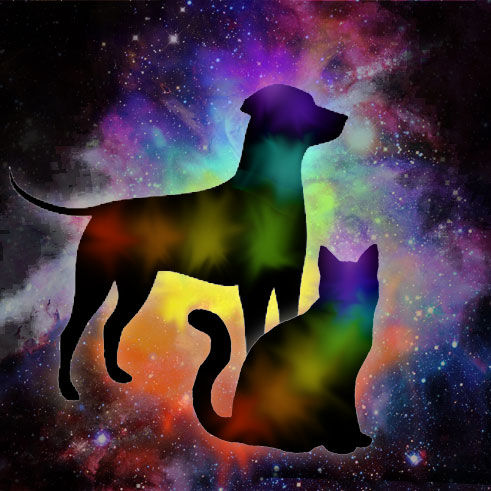 Animal Reiki Energy Treatment