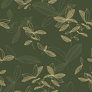 Ficus_oliivi1