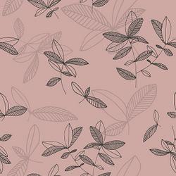 Ficus_roosa1