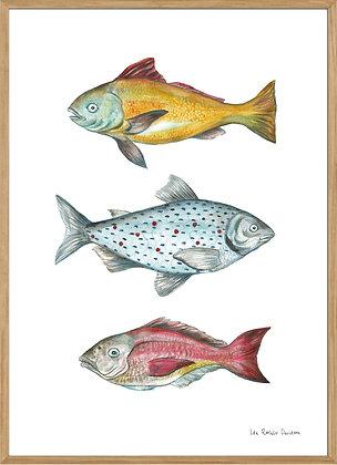 3 fish, A3