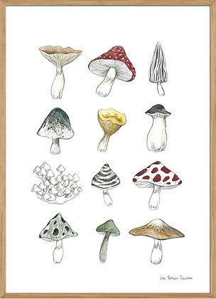 Mushrooms, A3