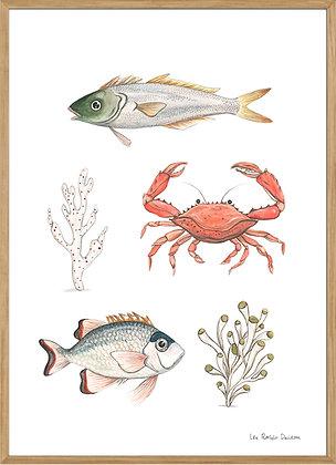 Shoal of fish no.2, A3