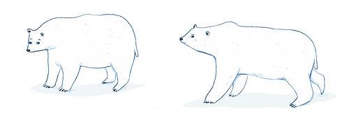 isbjørne