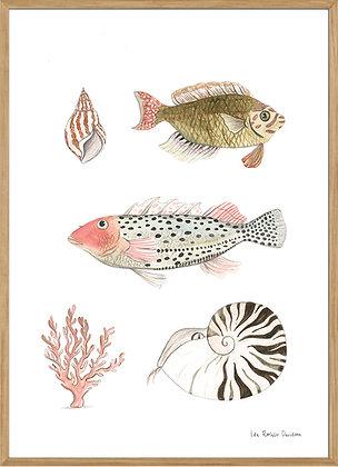 Shoal of fish no.3, A3