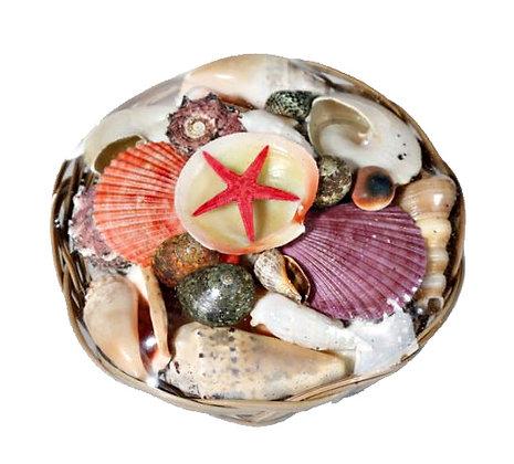 Shells in Basket