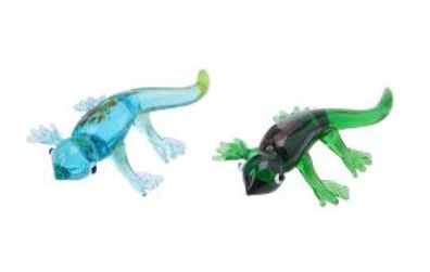 Small Glass Lizard
