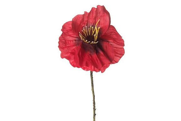 Light Red Poppy