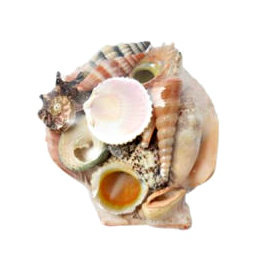 Filled Scallop Shell