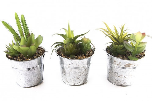 Cactus In Tin Pot