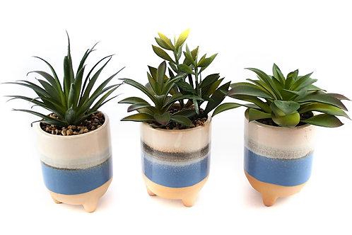 Cactus In Glazed Pot