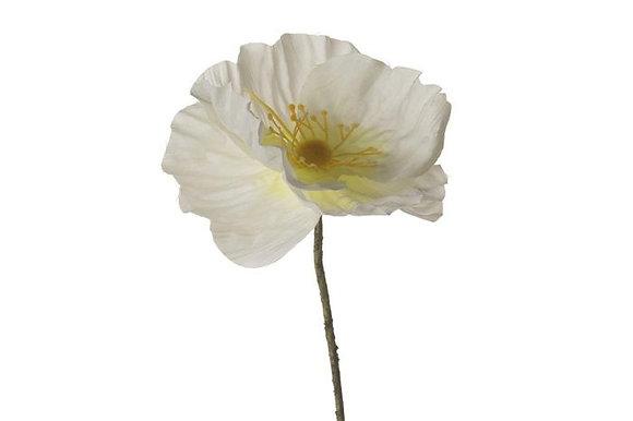 Cream Poppy