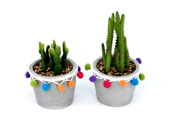 Cactus in Pom Pom Pot