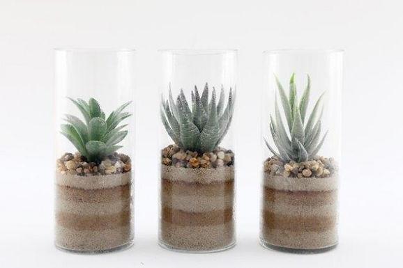 Cactus In Glass Tube