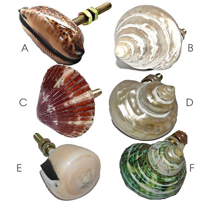 Shell Drawer Pull