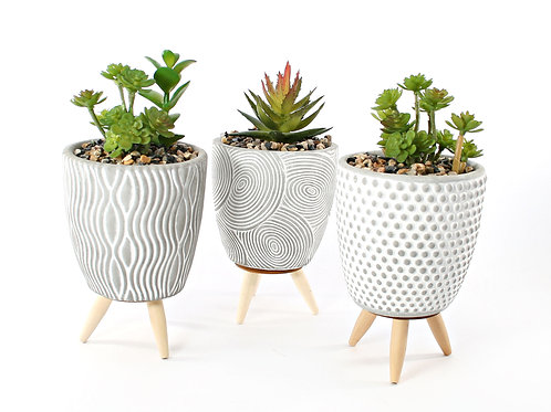 Cactus In Grey Pot