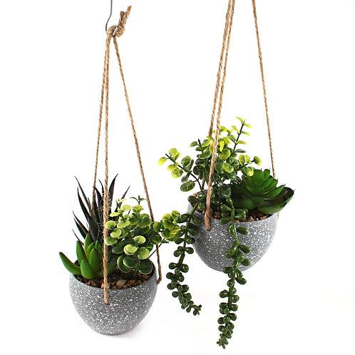 Cactus in Hanging Pot