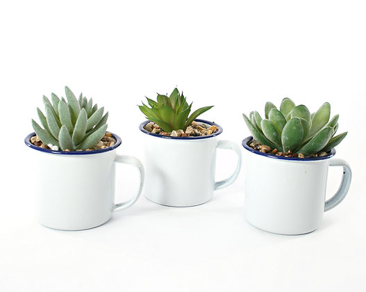 Cactus in Enamel Mug
