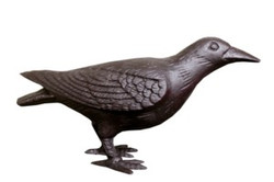 Head Up Crow
