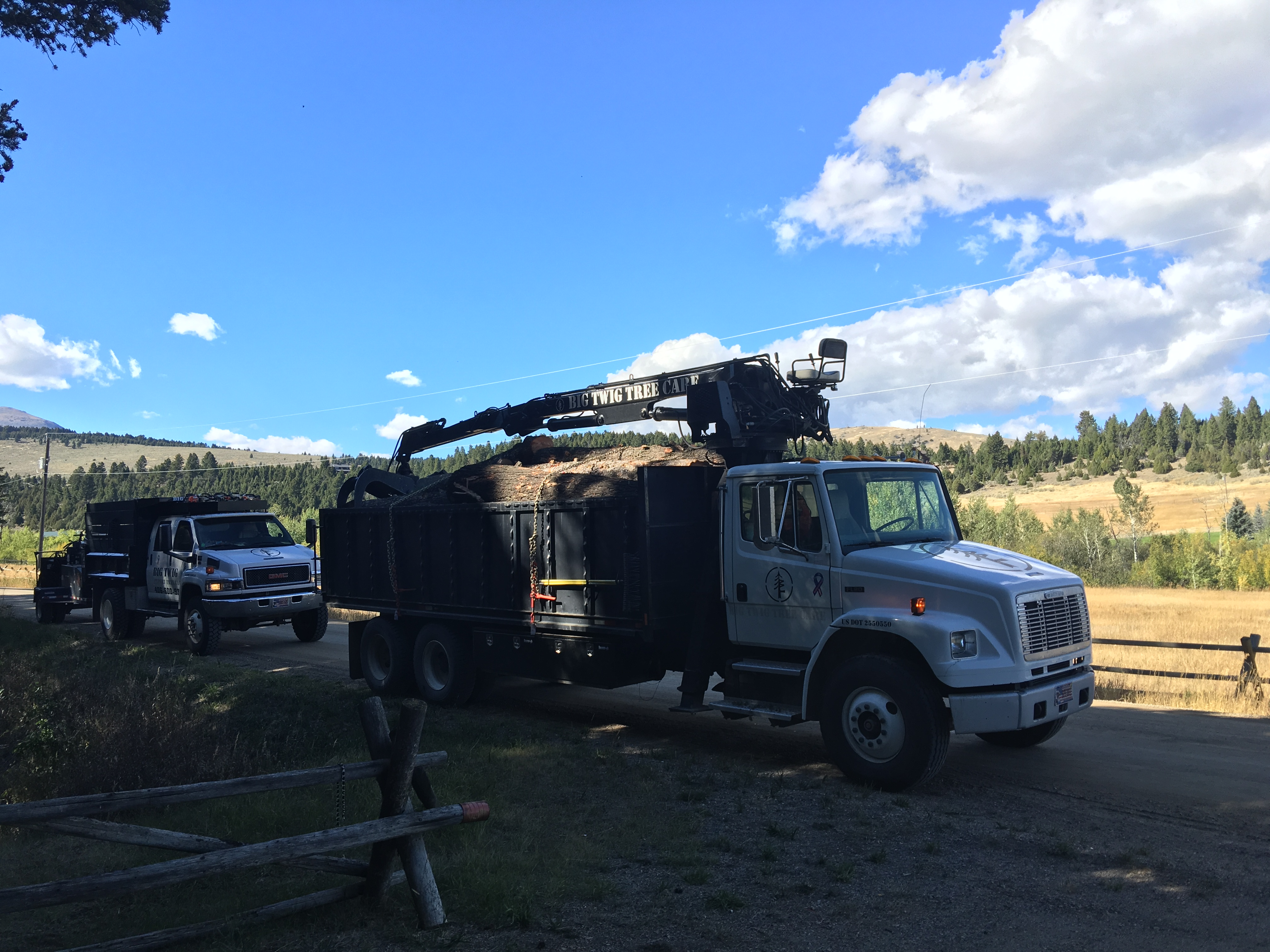 Tree Removal Ennis, MT