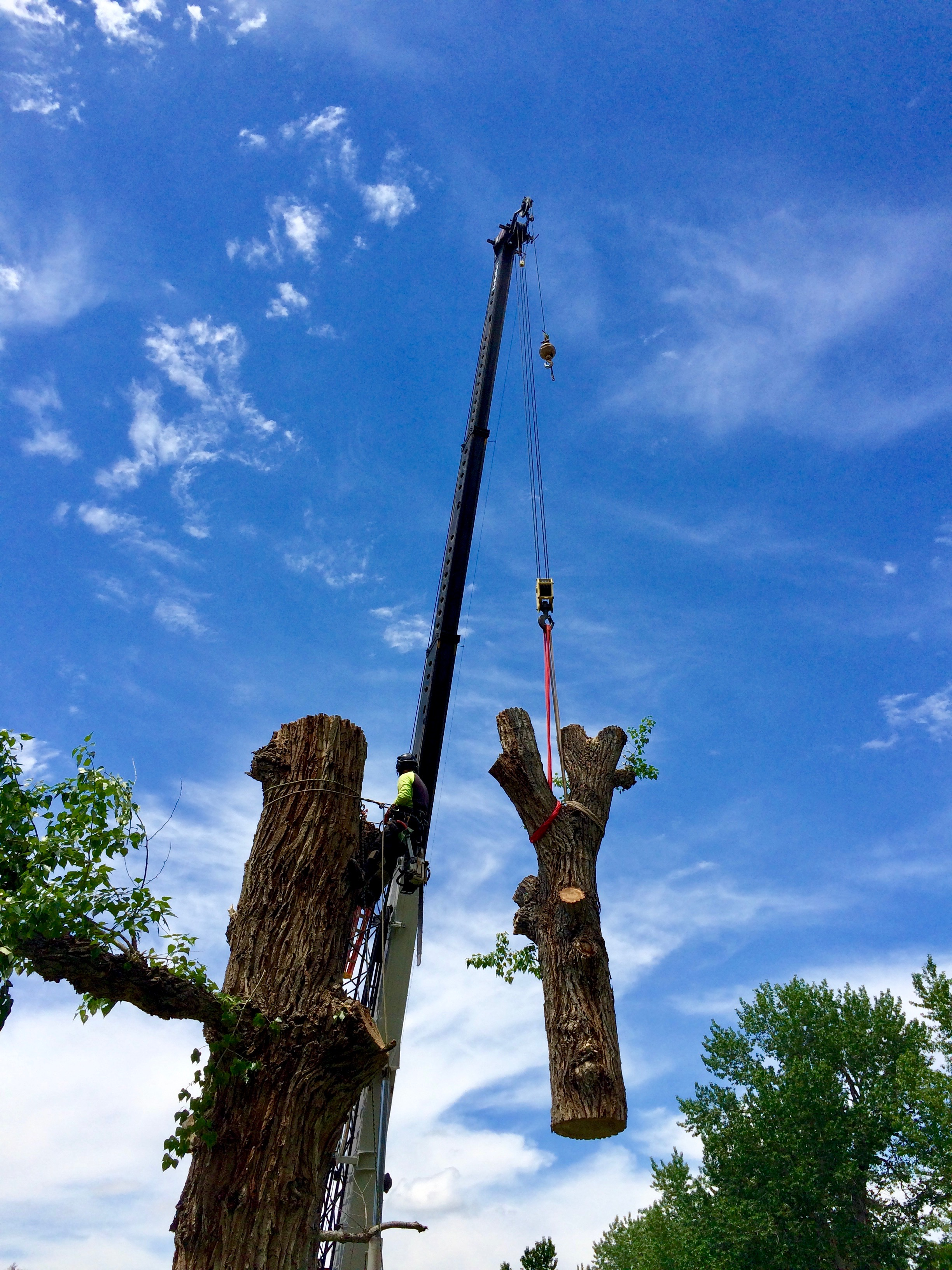 Tree Removal in Bozeman, MT