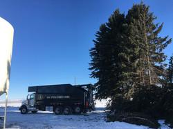 Tree Care Montana