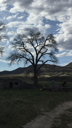 Tree Pruning Three Forks, MT