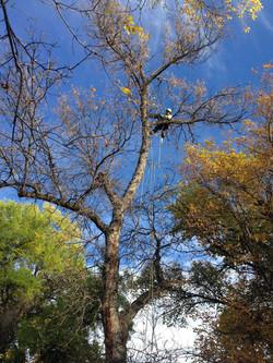 Tree Pruning Bozeman, MT05