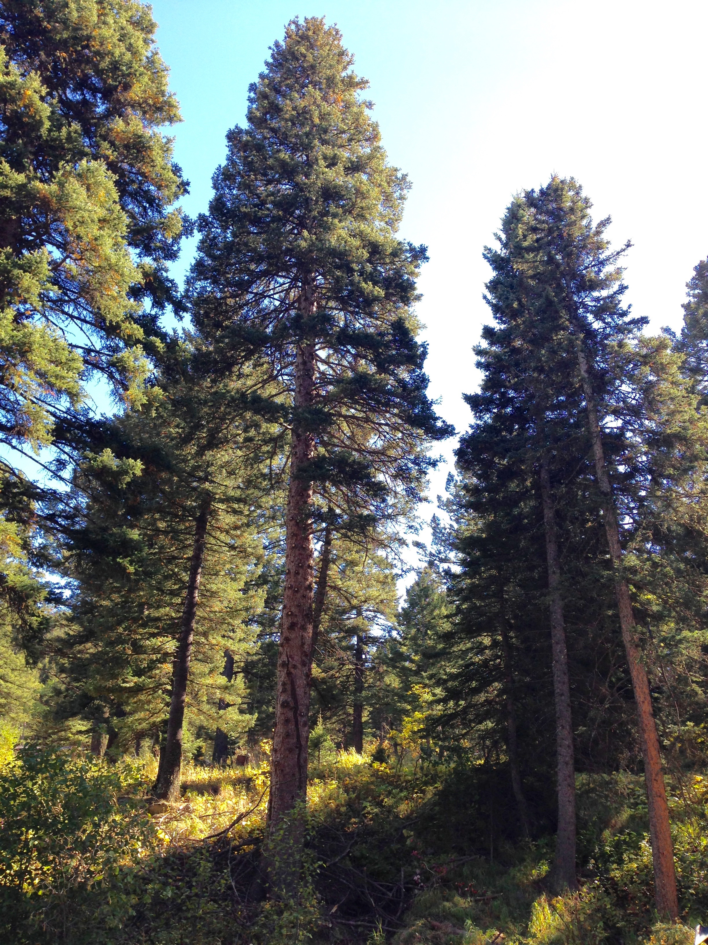 Fuels Reduction and ForestryThinning