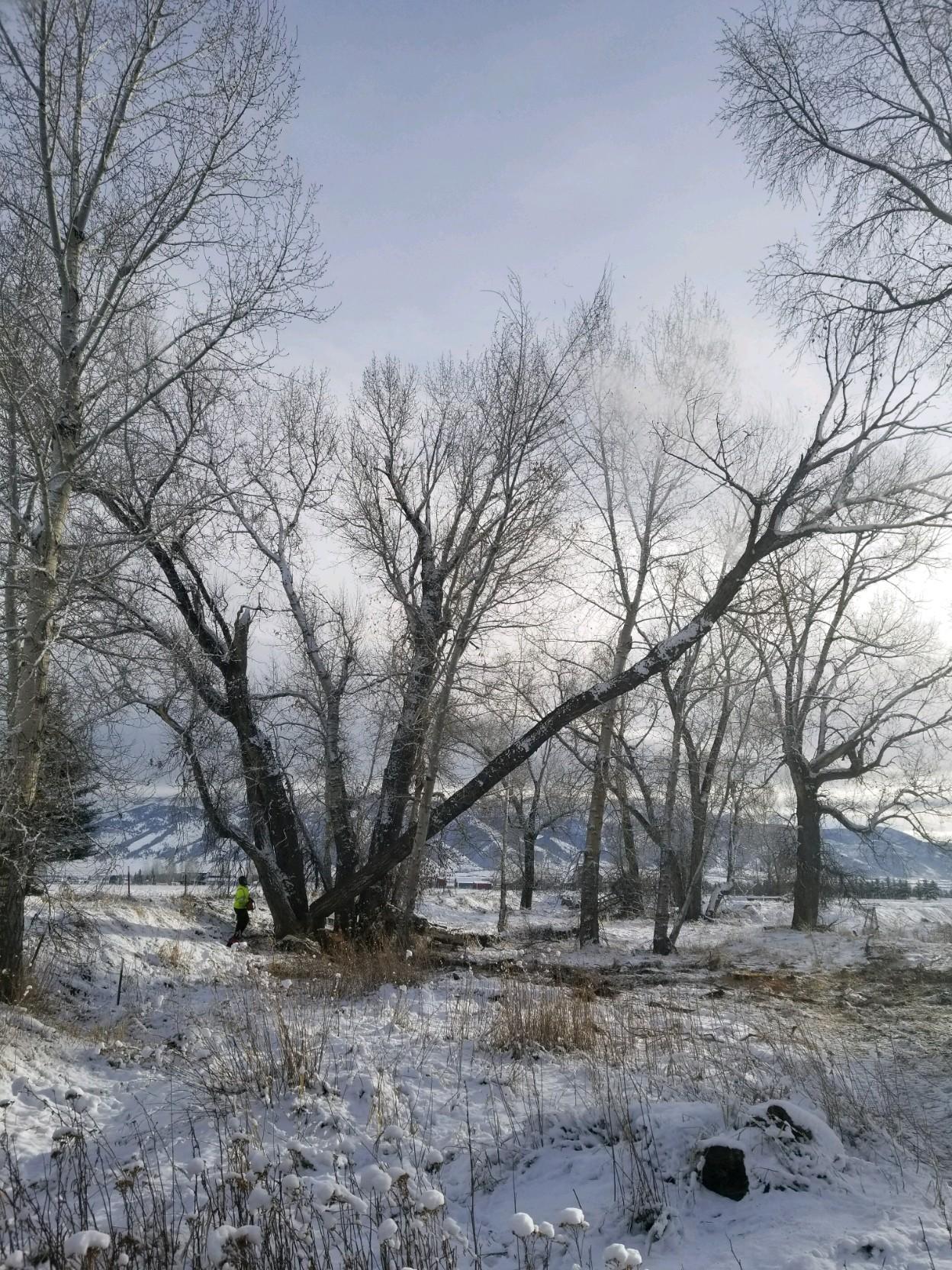 BIG TWIG Tree Care