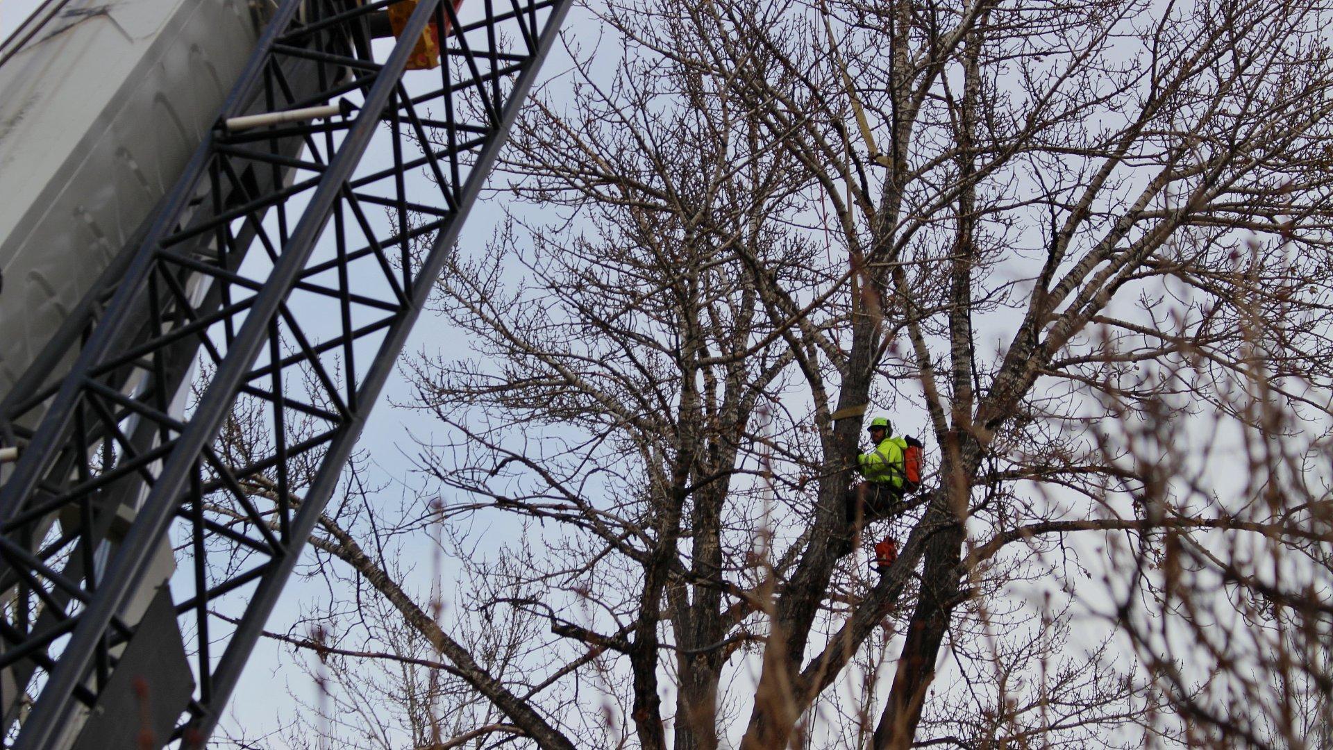 Bozeman Tree Removal