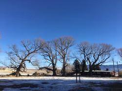 Tree Care Ennis, MT