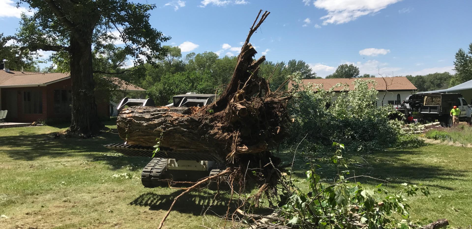 Stump Excavation BIG TWIG Tree Care
