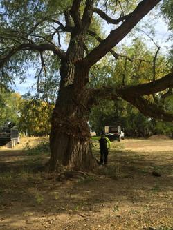 Tree Pruning Ennis, MT