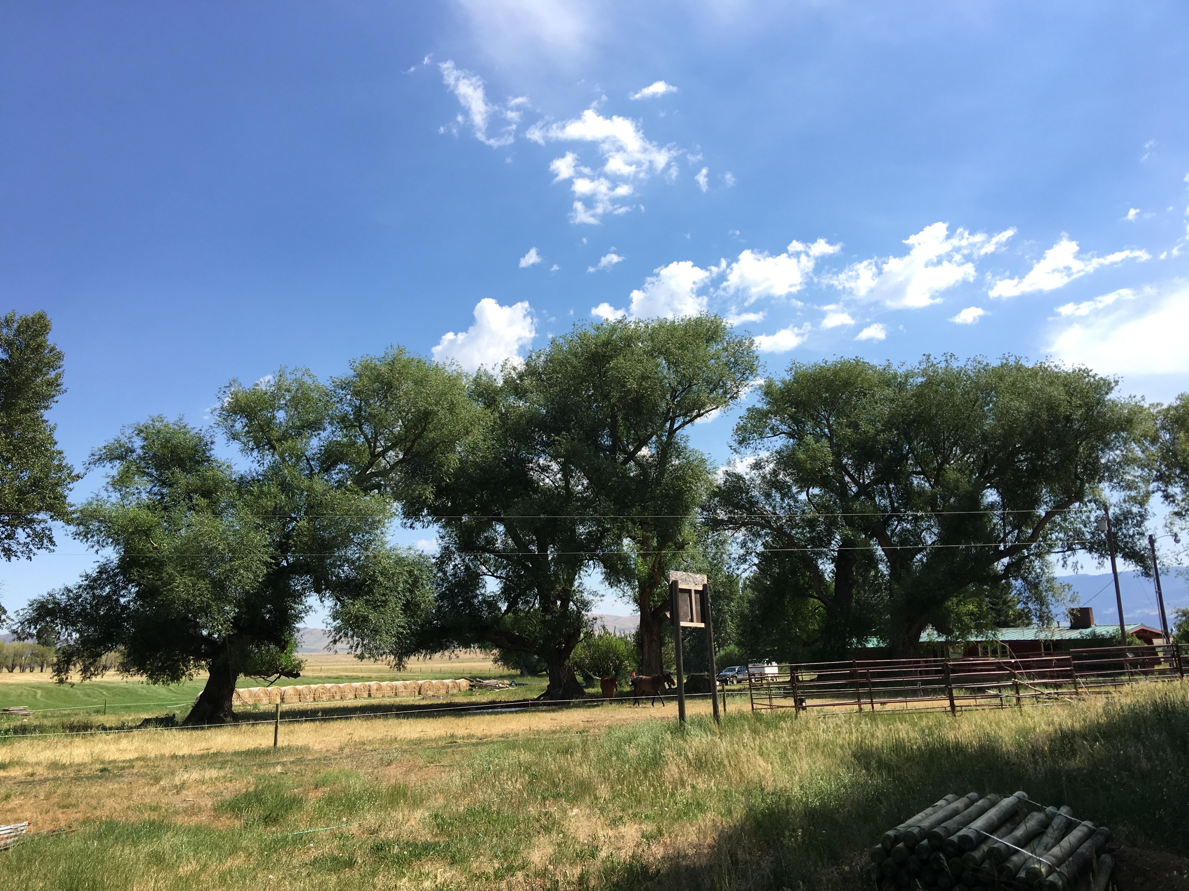 Tree Pruning Ennis, Montana