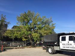 Tree Pruning Bozeman, MT