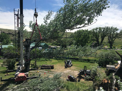Tree Removal Three Forks, MT