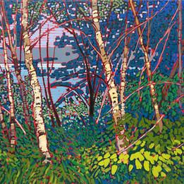 Window Through the Woods