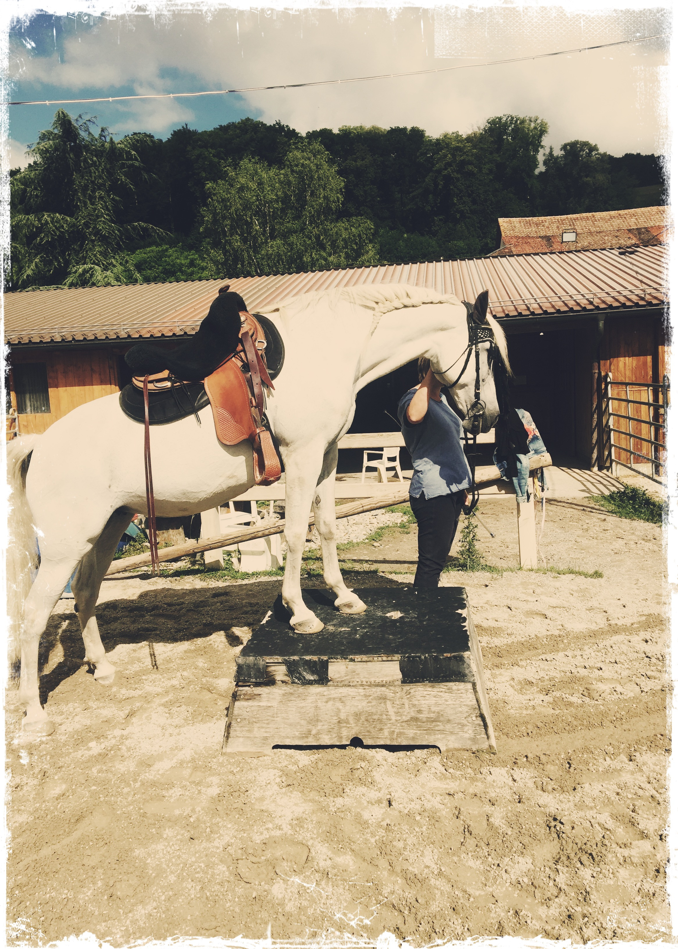 Riding Lessons/ Horse Training